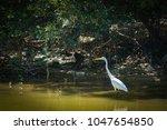blurred egret finding fish in...   Shutterstock . vector #1047654850