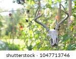 Deer Skull On Garden Fence Wit...
