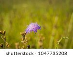 little wildflower of violet...   Shutterstock . vector #1047735208