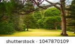 beautiful landscape  fresh fir... | Shutterstock . vector #1047870109