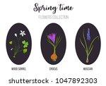spring flowers set crocus ... | Shutterstock .eps vector #1047892303