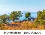 olive grove  dried grass  sea... | Shutterstock . vector #1047908209