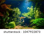 underwater jungle in tropical... | Shutterstock . vector #1047922873