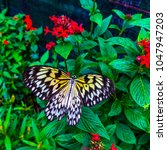 Butterfly Sanctuary At Baguio...