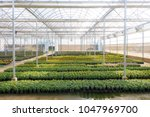 Blurred  Flowers Cultivation I...