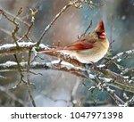 beautiful michigan birds in...   Shutterstock . vector #1047971398