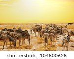 zebras at sunset | Shutterstock . vector #104800628