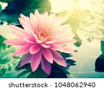beautiful lotus flower  lily... | Shutterstock . vector #1048062940