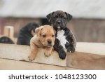 american staffordshire terrier... | Shutterstock . vector #1048123300