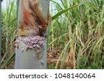 pinkish bugs at the node region ... | Shutterstock . vector #1048140064