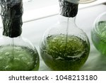 flask with microalgae inocula | Shutterstock . vector #1048213180