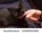 black cat playing with woman... | Shutterstock . vector #1048302400