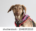 rescue dog portrait. very shy... | Shutterstock . vector #1048392010