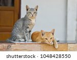 Stock photo two kittens cat lying and relaxing 1048428550