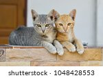 Stock photo two kittens cat lying and relaxing 1048428553
