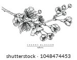 flower drawings. collection of... | Shutterstock .eps vector #1048474453