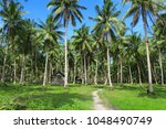philippine huts in palm trees... | Shutterstock . vector #1048490749