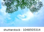 Soft Treetops Branch On Sky An...