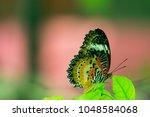 butterfly in the garden | Shutterstock . vector #1048584068
