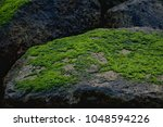 green lichen on the rock nearby ... | Shutterstock . vector #1048594226