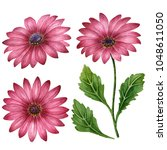 Watercolor Set Of Daisies  Han...