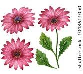 watercolor set of daisies  hand ... | Shutterstock . vector #1048611050