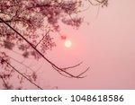 cassia javanica  java cassia ... | Shutterstock . vector #1048618586