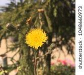 beauty of nature | Shutterstock . vector #1048660973
