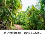 jungle  rainforest  forest.... | Shutterstock . vector #1048662350