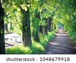 tree alley in summer   Shutterstock . vector #1048679918