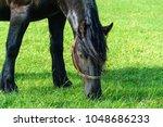 beautiful black horse on pasture   Shutterstock . vector #1048686233