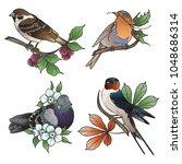 vector birds pigeon  sparrow ... | Shutterstock .eps vector #1048686314