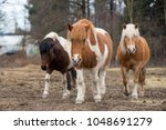 the two cute horses with their...   Shutterstock . vector #1048691279