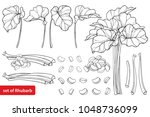 vector set with outline rhubarb ... | Shutterstock .eps vector #1048736099