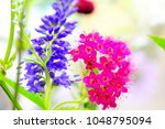 lupine and red flowers | Shutterstock . vector #1048795094