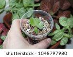 Beautiful Succulent Plant...