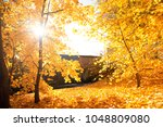 autumn scenery. beautiful gold... | Shutterstock . vector #1048809080