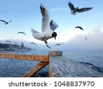 seagull grabs a piece of bread... | Shutterstock . vector #1048837970