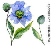 beautiful blue poppy flower... | Shutterstock . vector #1048853078