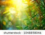 bamboo. bamboos forest. growing ... | Shutterstock . vector #1048858046