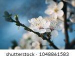 springtime background. soft...   Shutterstock . vector #1048861583