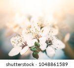 springtime background. soft... | Shutterstock . vector #1048861589