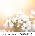 springtime background. soft... | Shutterstock . vector #1048861613