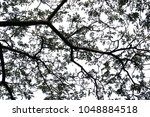 isolated tree on white... | Shutterstock . vector #1048884518