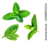 fresh mint leaves pattern...   Shutterstock . vector #1048894214