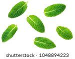 fresh mint leaves pattern... | Shutterstock . vector #1048894223