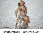 a cute monkey lives in a... | Shutterstock . vector #1048915634