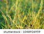 the grass garden   Shutterstock . vector #1048926959