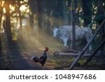 rustic atmosphere with roosters ... | Shutterstock . vector #1048947686