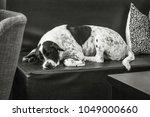 the sleep dog. | Shutterstock . vector #1049000660